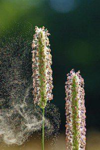 HIgh Pollen