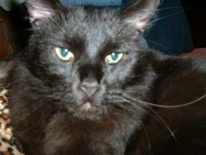 catsmay312004 012
